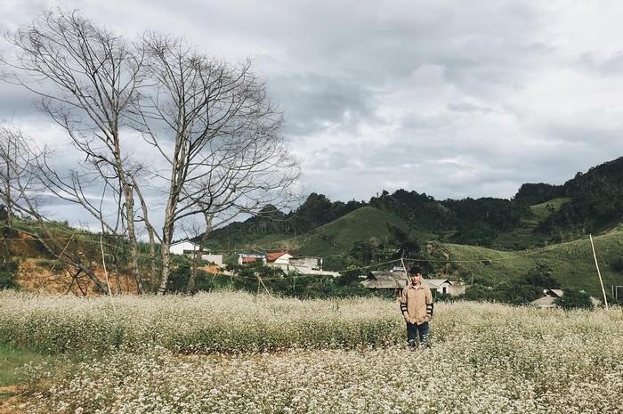 Hà Giang đầu mùa hoa tam giác mạch