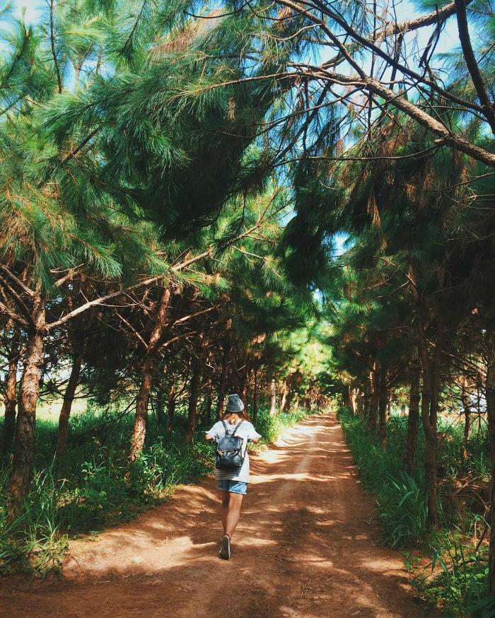Nơi ta lạc lối trong những rừng thông già lãng đãng