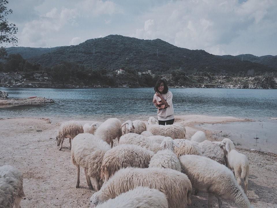 Ngẩn ngơ cùng đàn cừu trắng xinh