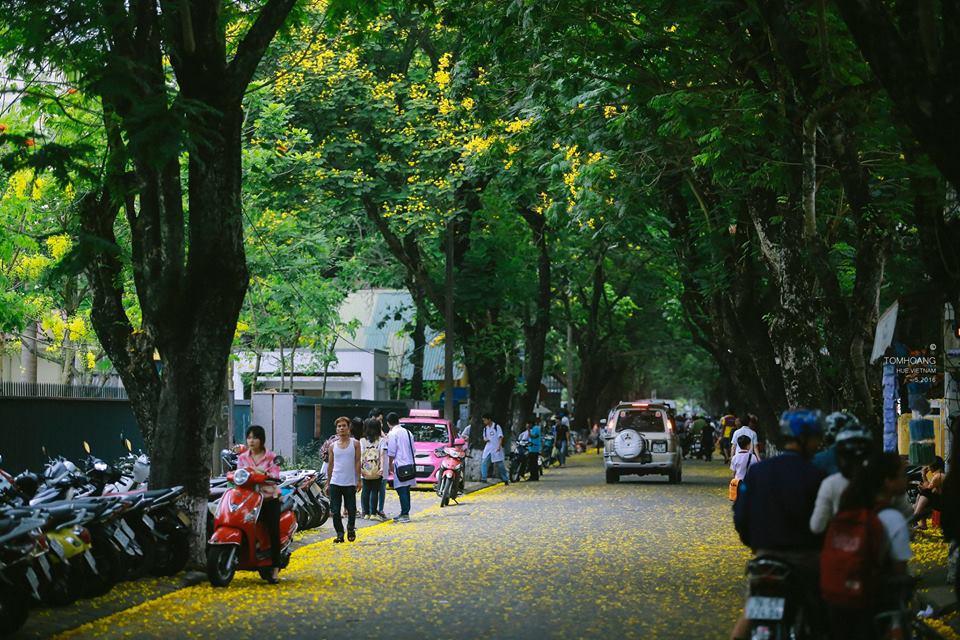 Khoảng thời gian tháng 5 đến tháng 7 du khách sẽ bắt gặp mùa hoa phượng vàng khoe sắc thắm khi tới Huế.