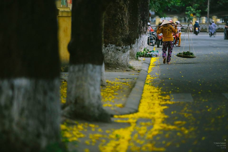 """Thời tiết ở Huế """"ẩm ương"""" như gái xuân thì, trời dễ nổi cơn giông nhưng cũng dễ bắt gặp ngày nắng là thời điểm hoa phượng vàng nở rực một góc trời."""