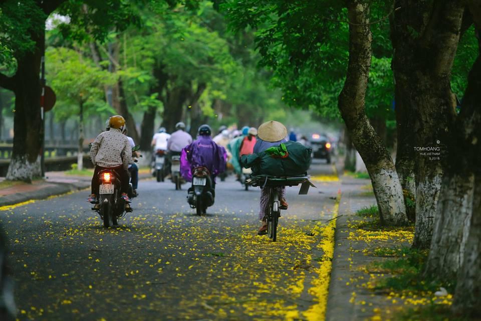 Hoa phượng vàng được trồng dọc các con phố Ngô Quyền, ngã ba Phan Bội Châu, Lê Lợi. Nơi đây thu hút nhiều du khách, cũng như những người yêu nhiếp ảnh tới để thỏa sức sáng tác.