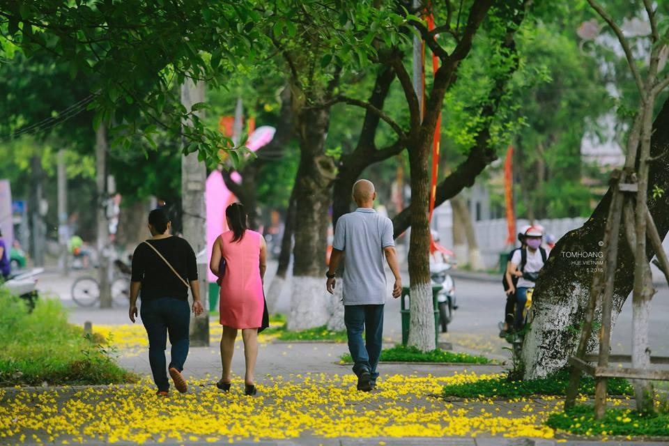 Cánh hoa mỏng manh, cuốn theo chiều gió tạo ra thảm hoa vàng tươi nguyên màu thời gian.