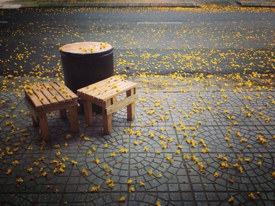 Trên mỗi con phố mùa hoa phượng vàng nở khung cảnh đẹp ngỡ ngàng khiến cho bất kỳ ai cũng phải xuýt xoa khen ngợi. Những sắc vàng ngập tràn phố phường, cánh hoa rụng đầy trên ngõ tạo nên khung cảnh đẹp mắt và lãng mạn.