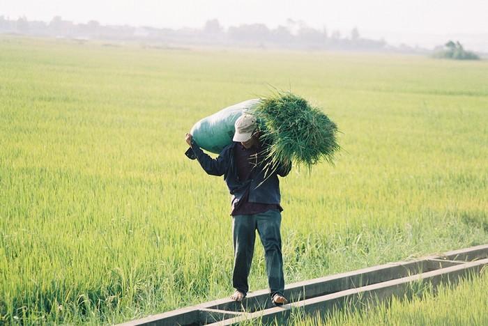 Thoát ra khỏi những ồn ào của phố xá, bạn cũng có thể bắt gặp những người nông dân chân chất. Nếu may mắn, bạn sẽ được nghe kể nhiều câu chuyện hay ho về vùng đất này.