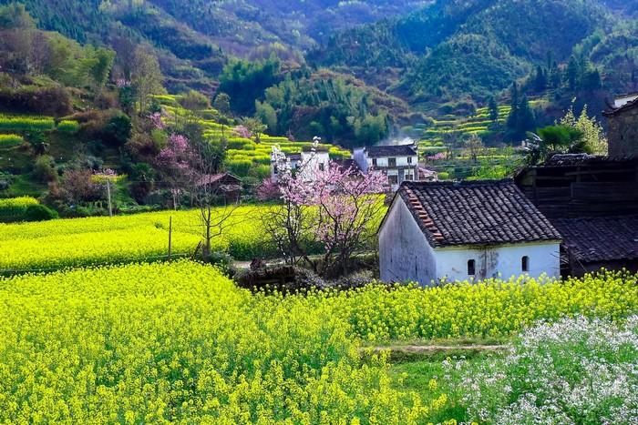 Ngôi làng hoa cải