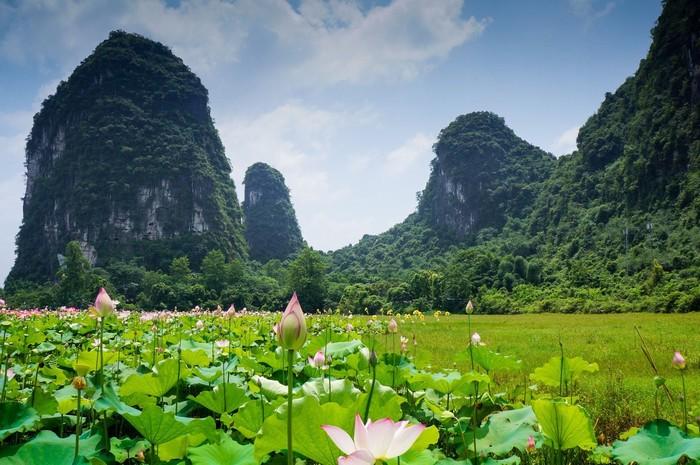 Trong đầm gì đẹp bằng sen ở Quảng Tây