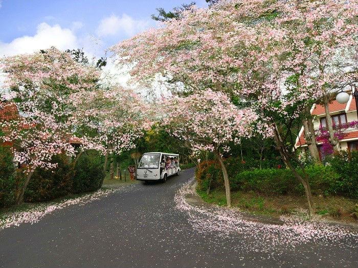 Nhưng nhiều người lại thích cung đường ngập tràn hoa ra Long Hải những ngày cận tết