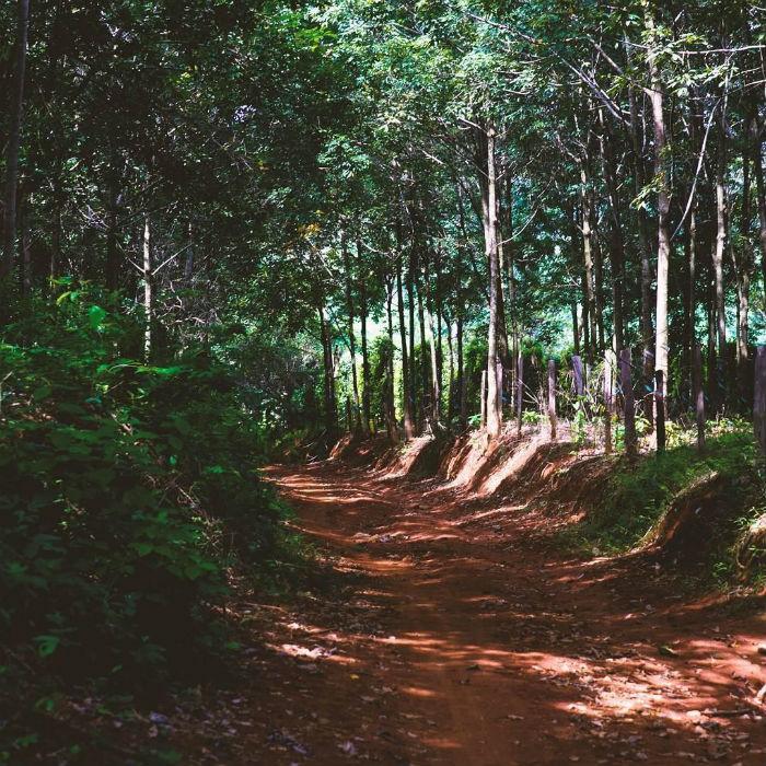 Lạc giã thiên nhiên tại Vườn Quốc gia Bù Gia Mập