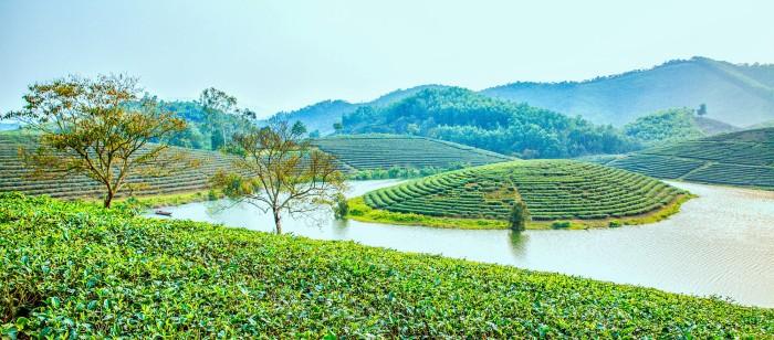 """Xiêu lòng với những """"ốc đảo"""" chè xanh ngút ngàn ở xứ Nghệ - Ảnh: Son Viet"""