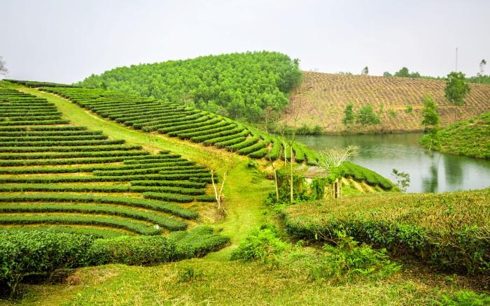 Chái nhà nhỏ xinh ẩn mình trên đồi chè căng tràn sức sống - Ảnh: Son Viet