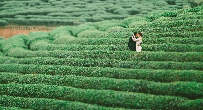 Trao nhau nụ hôn nồng thắm ngay tại đồi chè xứ Nghệ - Ảnh: Sưu tầm
