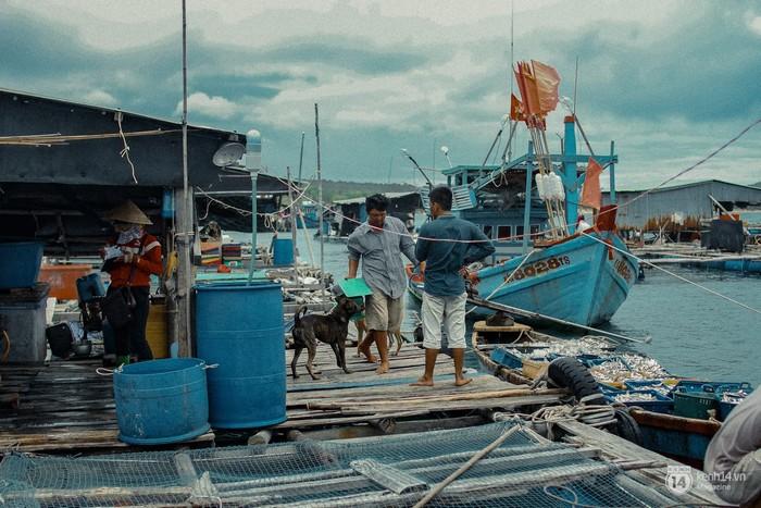 Những bè tàu nuôi trồng thủy sản như một cuộc sống thu nhỏ, vừa là nhà vừa là nơi mưu sinh. Mọi thứ cứ như vậy, trẻ nhỏ vui đùa, những chú chỏ chạy khắp nơi và công việc thì cứ tiếp diễn.
