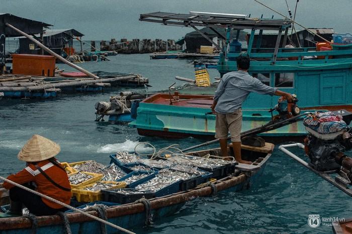 Mỗi ngày có hàng trăm chuyến đò chạy qua lại những bè tàu và thuyền đánh cá để trao đổi mua bán.