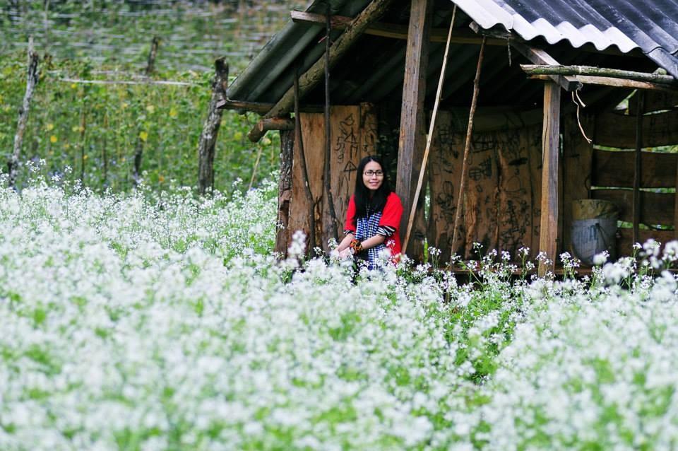 Mùa cải trắng Mộc Châu