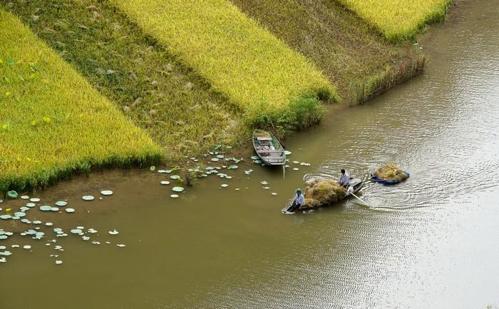 Được chất đầy thuyền mang về nhà
