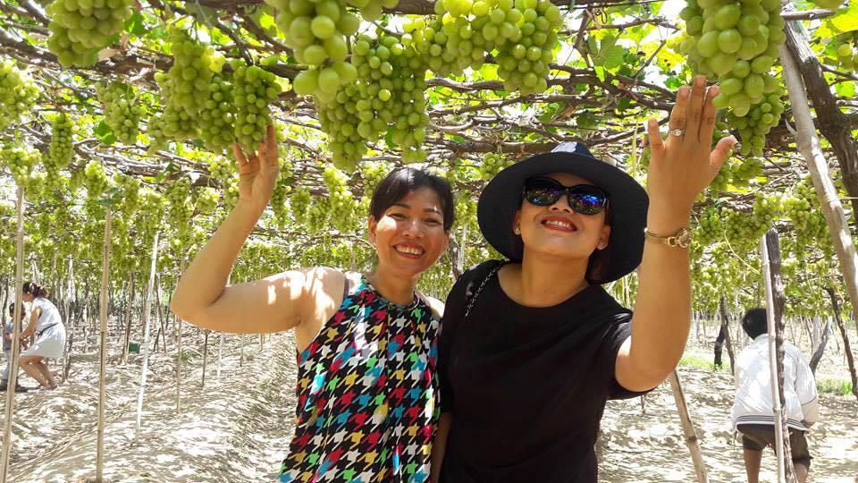 Những năm gần đây, nhiều vườn nho ở Ninh Thuận đã có thêm dịch vụ homestay. Du khách đến đây vừa thưởng thức bữa trưa ngay giữa vườn cùng nhâm nhi ly rượu nho thơm nồng tự cất của người dân, hay tráng miệng bằng những chùm nho chín mọng.