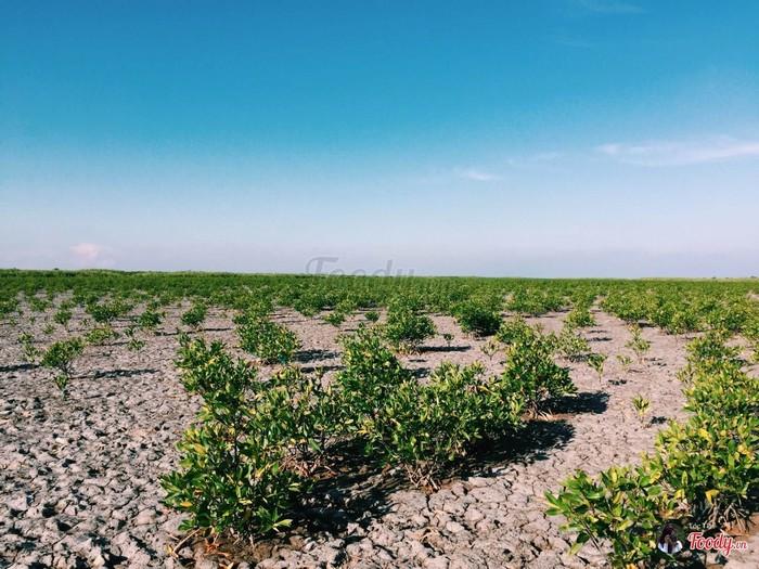 Đất khô cằn và cây cối bao quanh