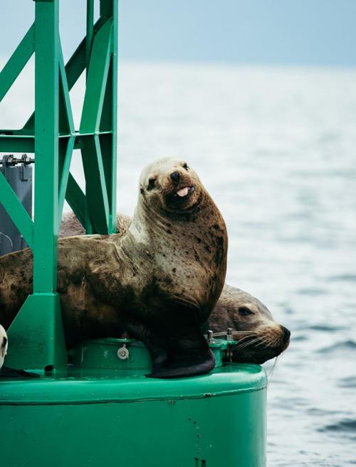 Khám phá sự đa dạng của hệ động vật tại Alaska là một trong những trải nghiệm bạn không thể bỏ qua. Bang Alaska hiện là nhà của hơn 450 loài chim và hàng trăm điểm ngắm gấu. Những con sư tử biển lang thang ở các vùng nước hay nai sừng tấm còn có thể bắt gặp ở nhiều nơi.