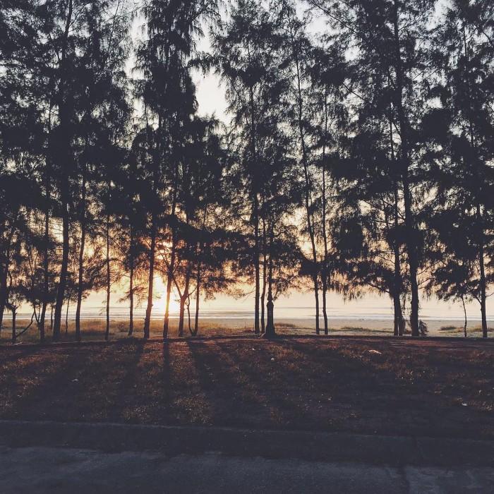 Nắng trời qua nhành cây