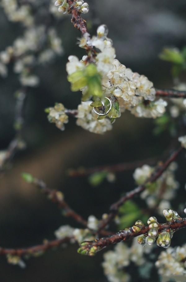 Nhẫn cầu hôn được bạn nam treo trên nhánh cây để chuẩn bị ngỏ lời với người ấy