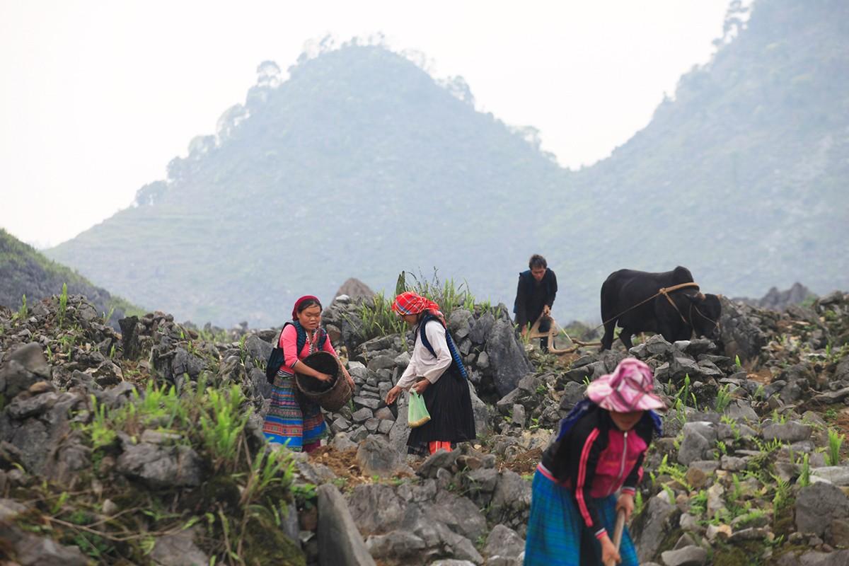 Đem đến núi đồi cao nguyên đá những 'bông hoa' đẹp nhất