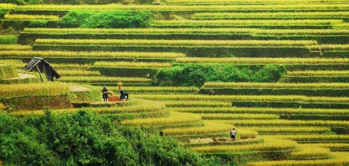 Một mùa bội thu - Ảnh: Phan Tuân Khanh