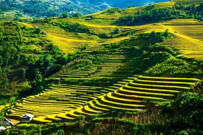Nơi ngắm mùa vàng đẹp nhất Việt Nam - Ảnh: Sưu tầm