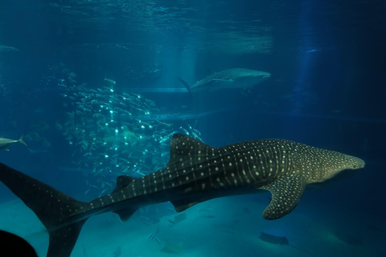 Những loài sinh vật biển kỳ lạ