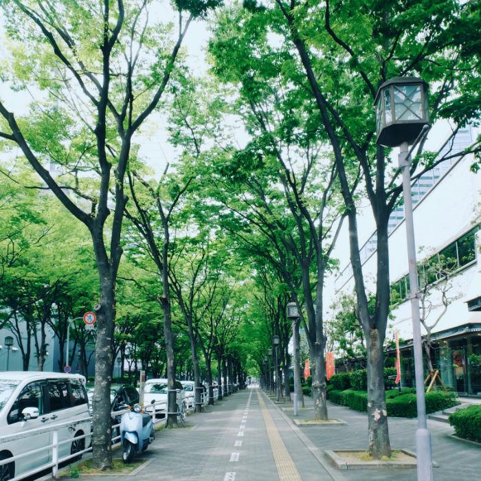 Con phố rợp bóng cây xanh