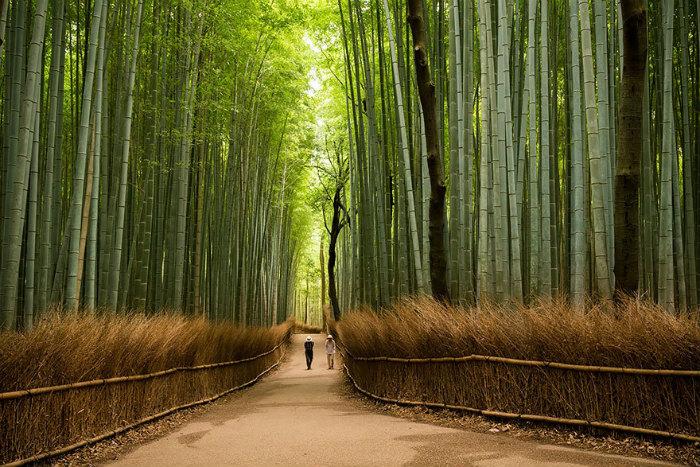 Rừng tre Sagano, Arashiyama