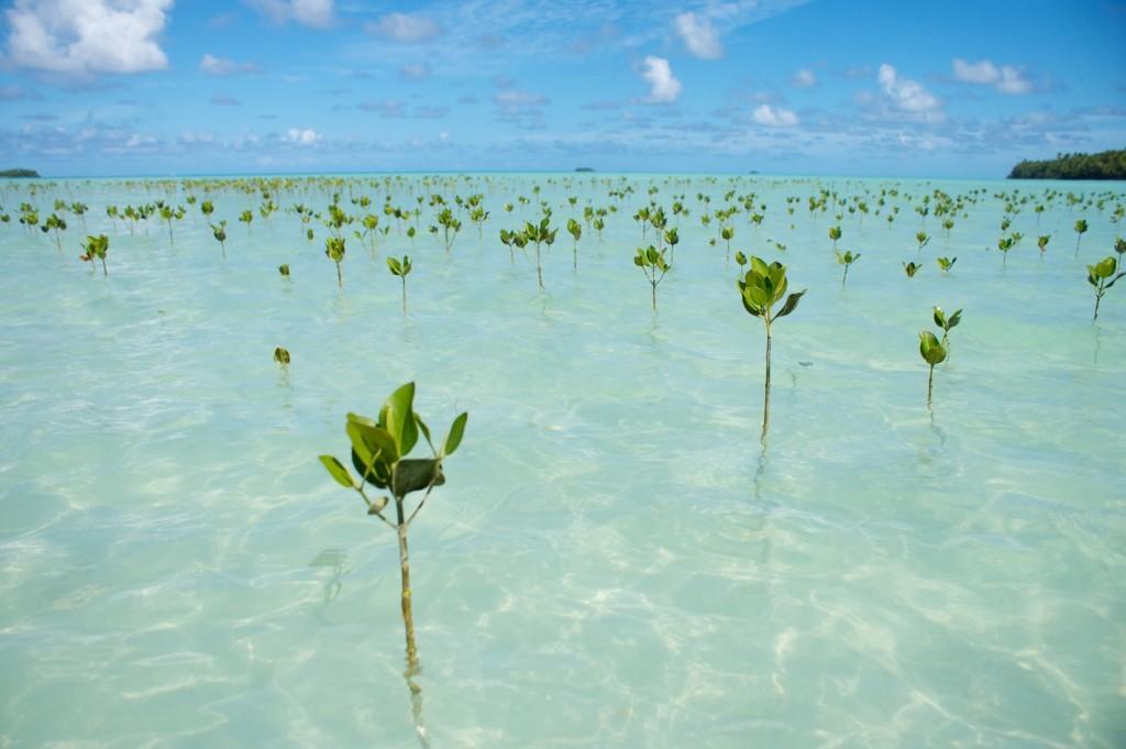 Cây trên đảo Tuvalu
