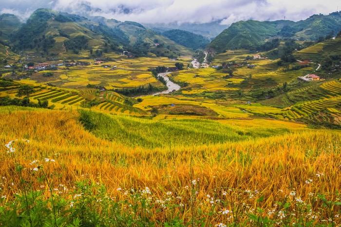 Mơ màng trong sắc vàng lúa chín ở Tả Van