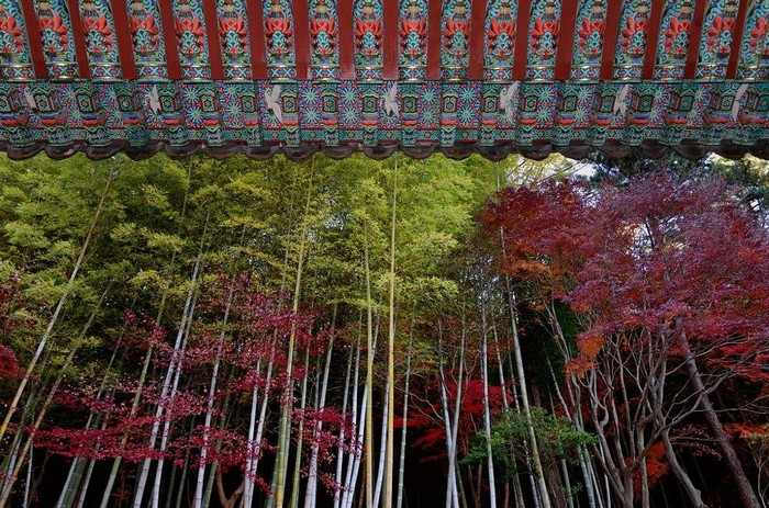 Hàn Quốc thanh bình và tuyệt đẹp