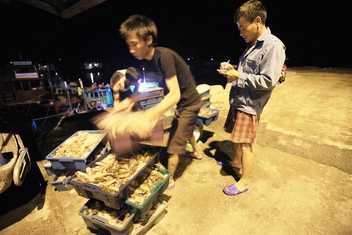 Thủy hải sản sau khi mua bán xong sẽ ướp đá rồi lên đường đến các chợ đầu mối ở các tỉnh thành.