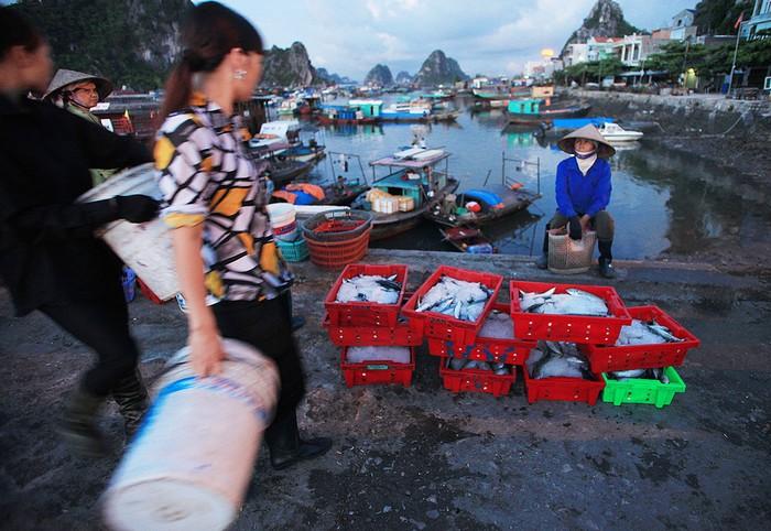 Hiện cảng Cái Rồng không chỉ là cảng cá, mà còn là điểm trung chuyển phục vụ tuyến giao thông đường thủy từ trung tâm thị trấn Cái Rồng ra các xã đảo của huyện Vân Đồn, Cô Tô.