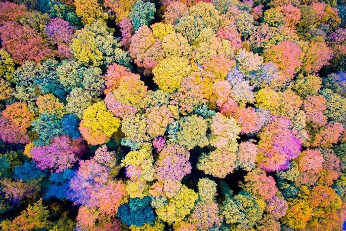 Núi Eifel vào mùa thu rực rỡ bởi sắc màu của lá cây, từ xanh, đỏ, vàng đến hồng, tím.
