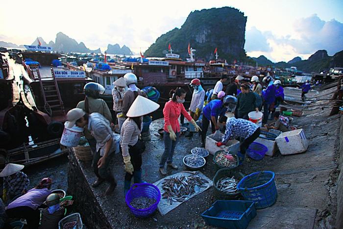 5h sáng là thời điểm khu cầu cảng Cái Rồng trở nên ồn ào, đông đúc nhất. Người bán người mua chen nhau, tiếng cười nói sang sảng hòa trong tiếng ghe thuyền chở hải sản từ các đảo và bè cập cảng.
