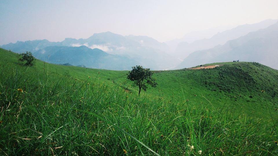 Đồng cỏ xanh tận chân trời