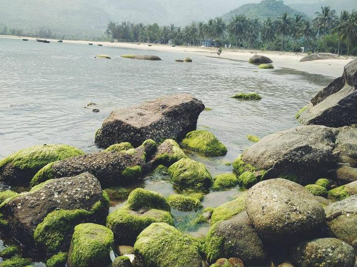 Bãi đá làng Vân rêu xanh rì