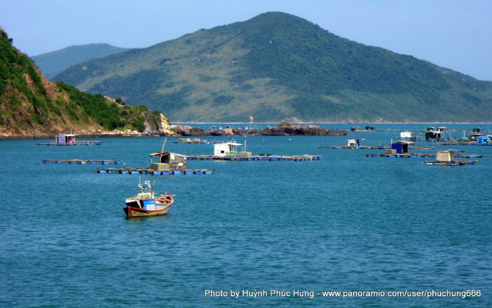 Các bè nuôi tôm hùm trên mặt biển Nhất Tự Sơn