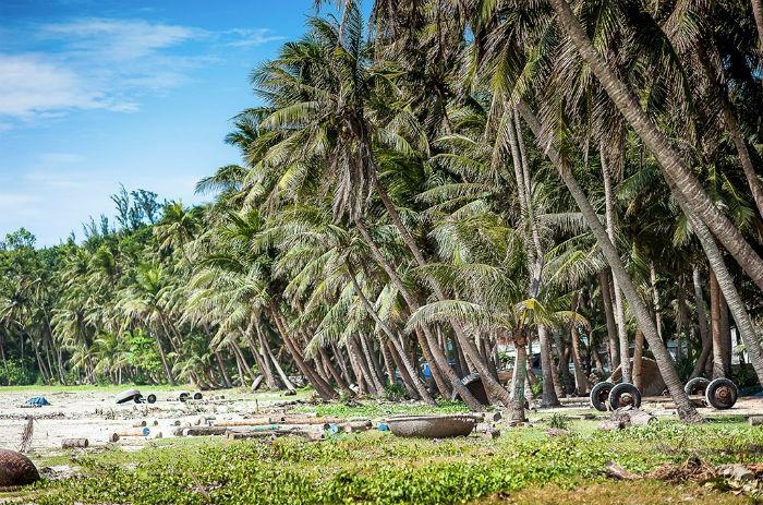 Hàng dừa Tam Hải xiêm trải dài xanh mát