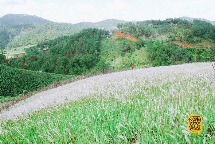Ngọn đồi hơn 10 ha được phủ lên lớp áo mới