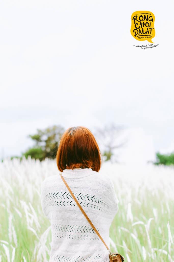 Ngẩn ngơ ngắm nhìn đồi cỏ tranh đẹp mê hồn ở xã Đạ Sar, huyện Lạc Dương