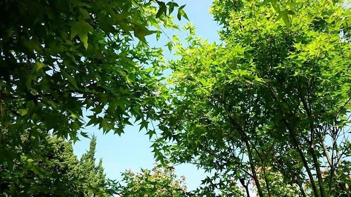 Không gian xanh mát làm dịu tiết trời những ngày hạ nắng nóng