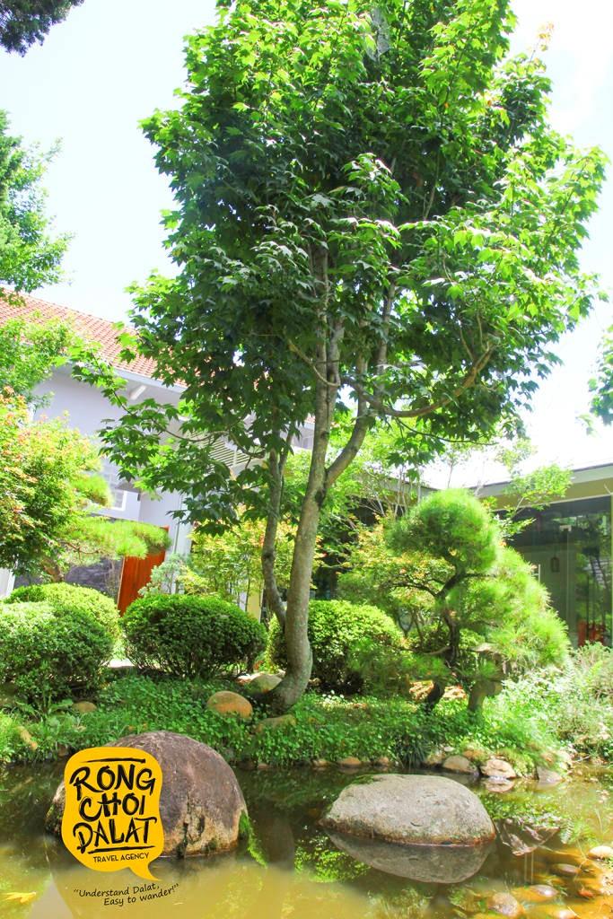 Cây cối xanh tươi, um tùm căng tràn sức sống
