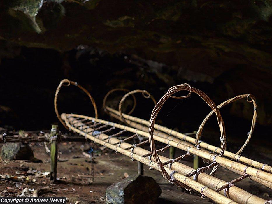 Từ đó, những người thu tổ yến sẽ treo mình trên dây, dùng các thang làm thủ công từ tre nứa (có buộc thêm các vòng tròn). Chiếc thang đặc biệt này sẽ được nâng lên dựa vào thành hang như những dàn giáo.