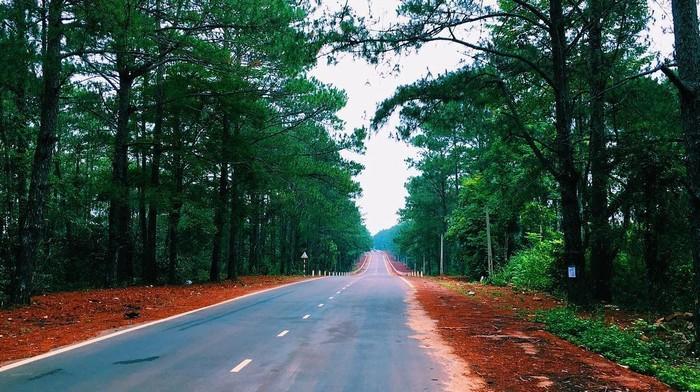 Con đường với hai bên cây xanh