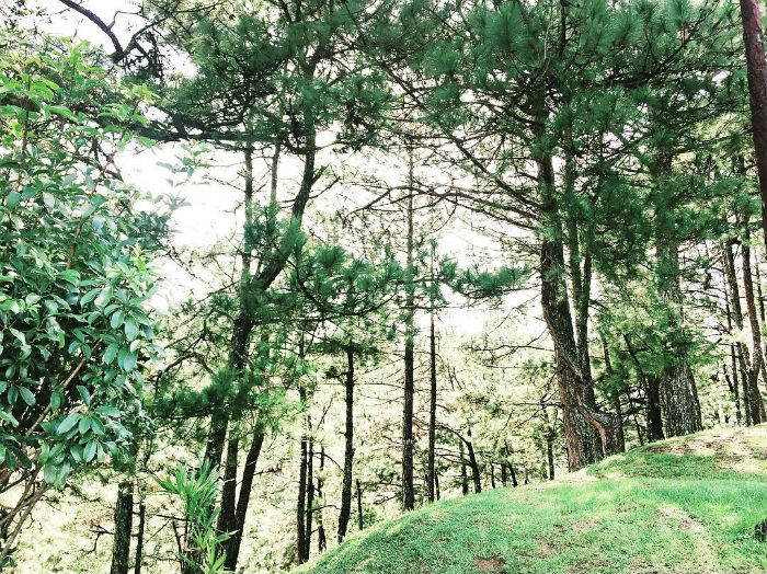 Nhẹ nhàng và xanh tươi Đà Lạt