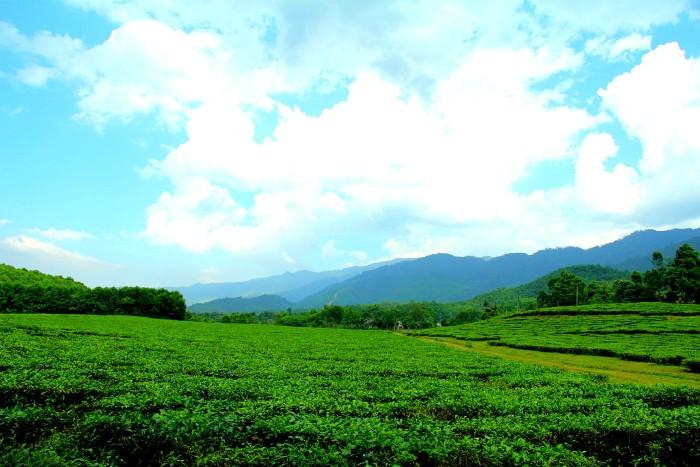 Đi đến lúc bắt găp dải lụa xanh thênh thang, chính là đồi chè Đông Giang đó - Ảnh: Taro Photography